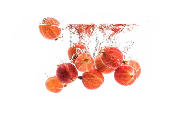 Bunch of red gooseberries sinking in the clear water, isolated on white background royalty free stock photo