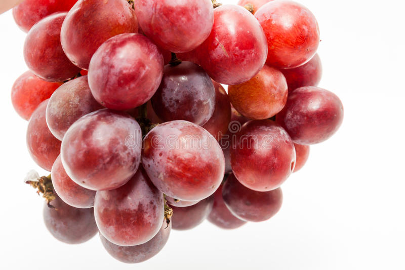 Bunch of red grapes. Big red grapes isolated in white background royalty free stock photo