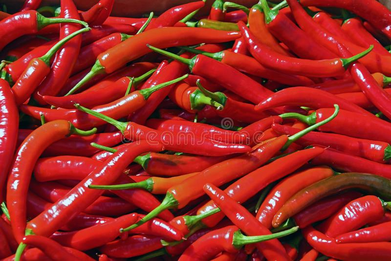 Chilly Peppers Background stock photos