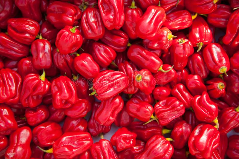 Bunch of red hot peppers royalty free stock image