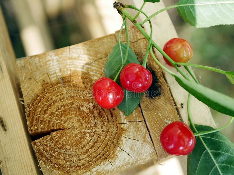 A bunch of red ripe cherries on a background of a cut of a tree stock photo