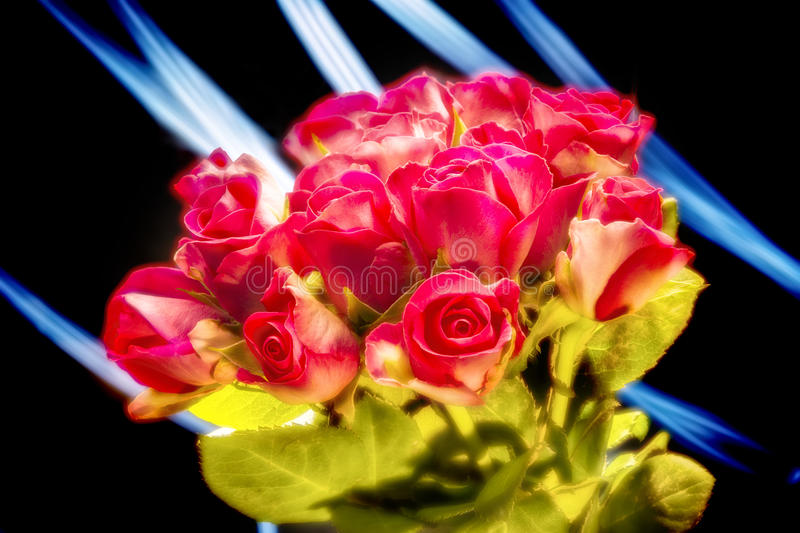 Bunch of red roses. On black background whith blue light brushes royalty free stock photo