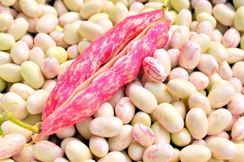 A bunch of red and white beans. royalty free stock image