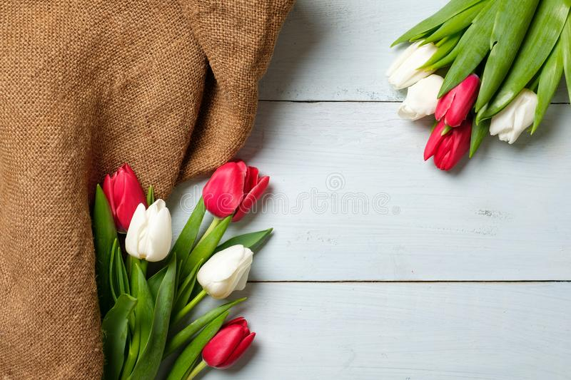 Bunch of red and white tulips with burlap fabric on light blue wooden table . Banner mockup for easter, womans day, mothers day, s. Pring holidays royalty free stock image