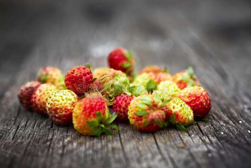 Bunch of red wild strawberry stock photo