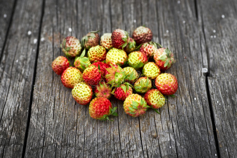 Bunch of red wild strawberry stock images