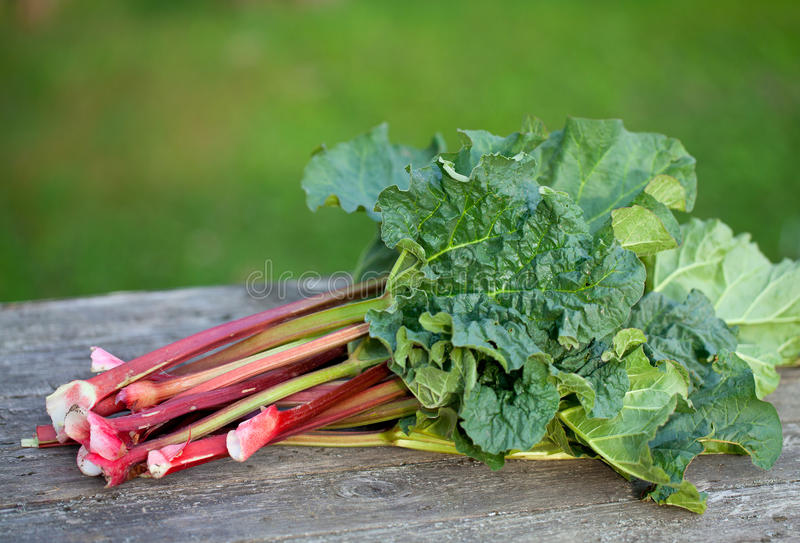 Bunch Of Rhubarb Royalty Free Stock Photo