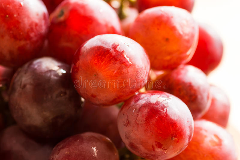 Bunch of ripe fresh juicy red and pink grapes with water drops in sunlight, bright colors, summer fall harvest. Copy space stock photography