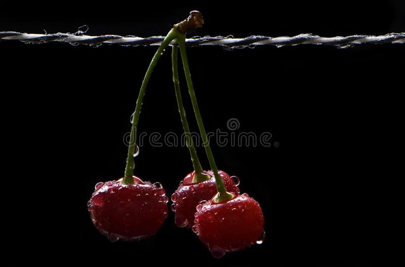 Bunch of ripe cherry in drops stock images