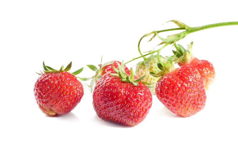 Download Bunch of ripe strawberries stock photo. Image of leaf - 23100870