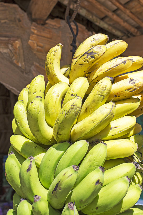 Bunch of ripened bananas royalty free stock photography