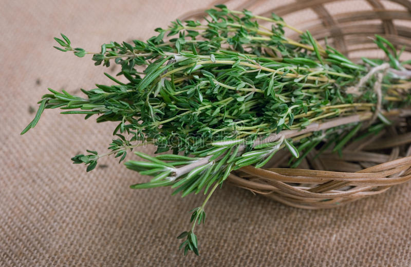 Bunch of rosemary and thyme stock photos