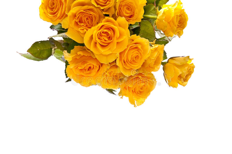 Download Bunch of roses stock photo. Image of gift, elegance, dating - 13856948