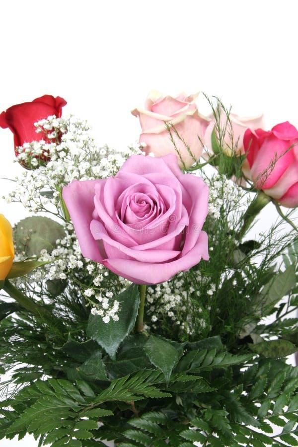 bunch roses στοκ φωτογραφία