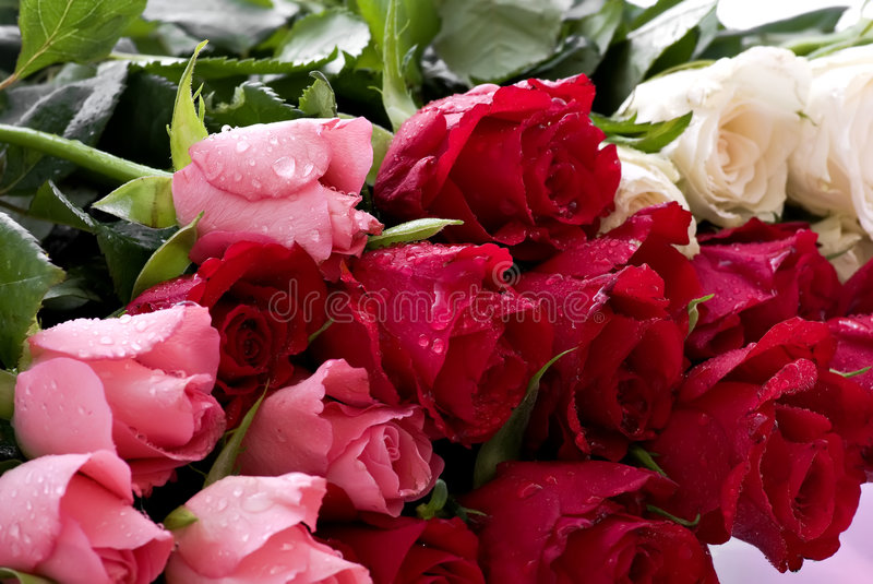 Bunch of Roses. A bunch of roses in different colors and water drops on the flowers royalty free stock image