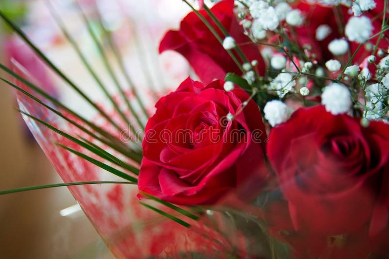 Bunch of roses stock photo