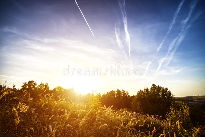 Bunch of SAND SEDGE Carex grass plant at sunset. Bunch of SAND SEDGE Carex grass plants at sunset royalty free stock images