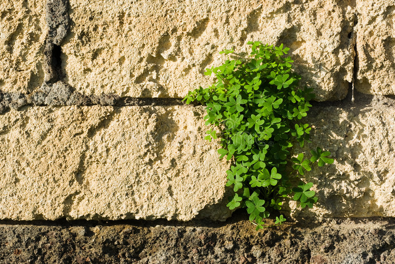 Download Bunch of shamrock stock image. Image of colorful, outside - 8317367
