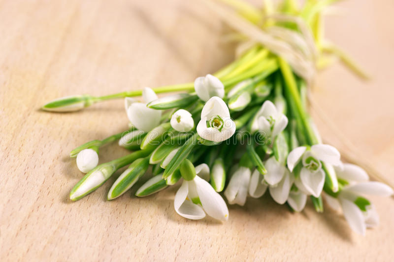 Download Bunch of snowdrops stock image. Image of floral, delicate - 18193579