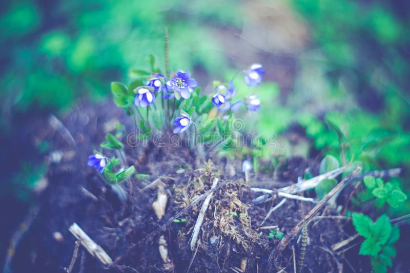 Bunch of spring wild flowers stock photos