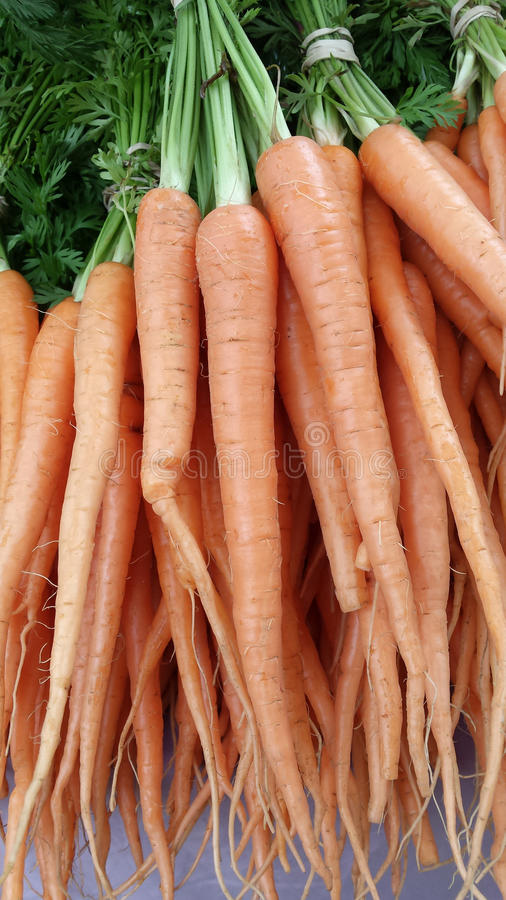 Bunch of Tasty Organic Carrots stock images