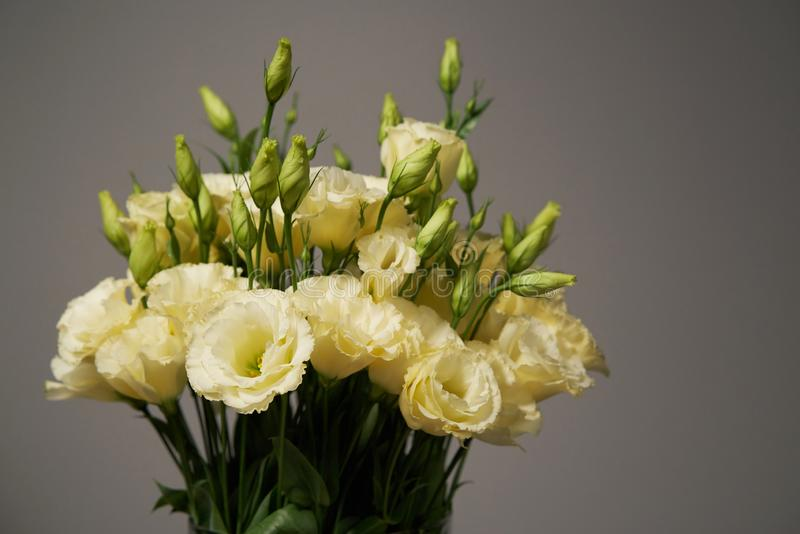 Bunch of tender yellow flowers royalty free stock photography