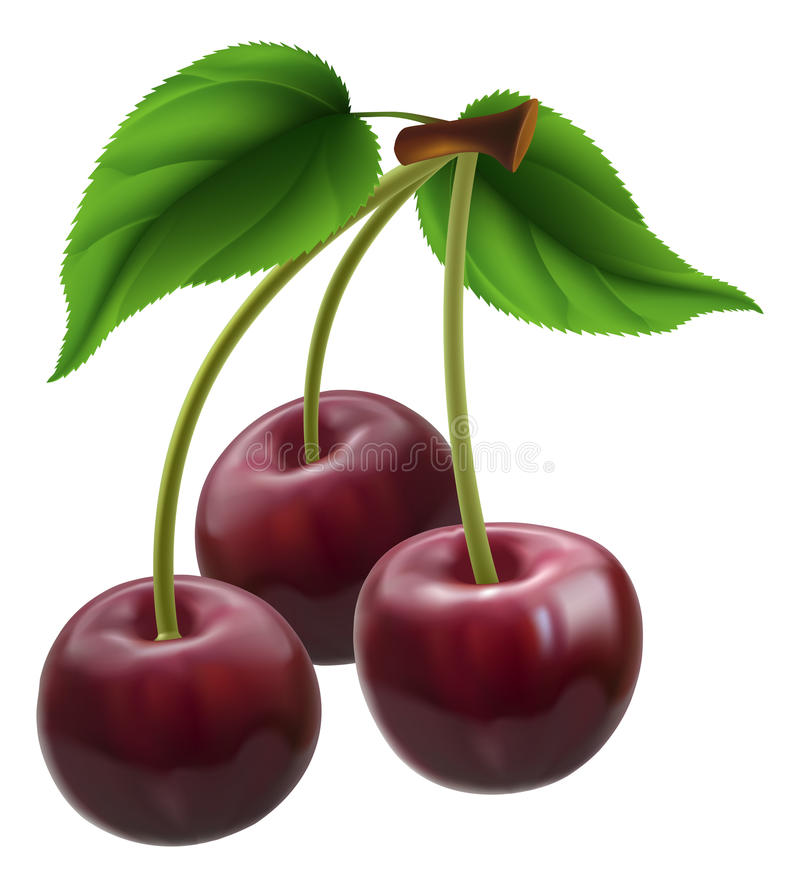 Bunch Of Three Cherries Stock Photos