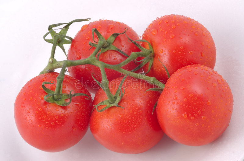 Download Bunch of tomatoes stock image. Image of gardening, cooking - 1016533