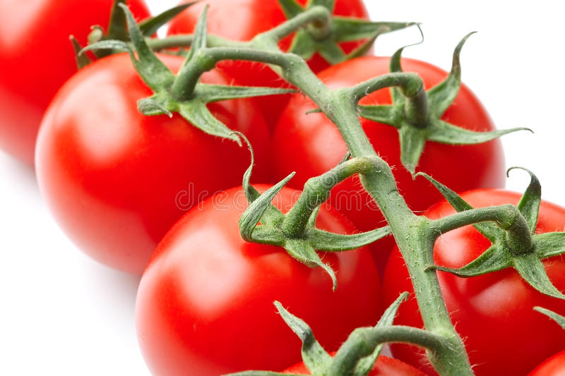 Bunch of tomatoes on the vine stock image