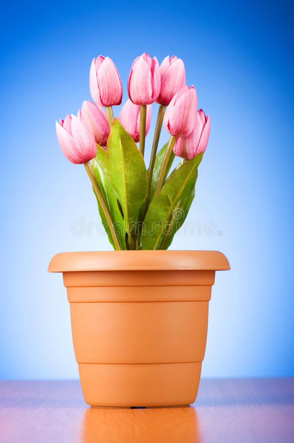 Download Bunch of tulip flowers stock image. Image of bright, petal - 15489195