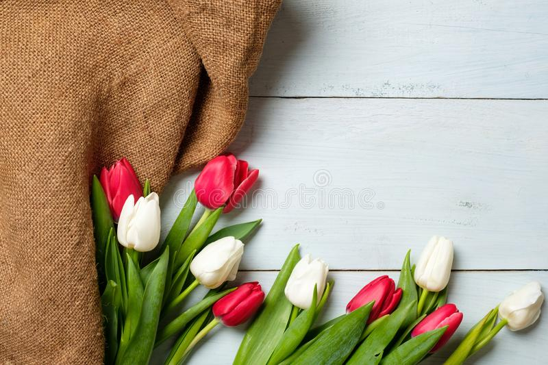 Bunch of tulips and burlap fabric on light blue wooden table. Banner mockup for easter, womans day, mothers day. Spring holidays royalty free stock photo