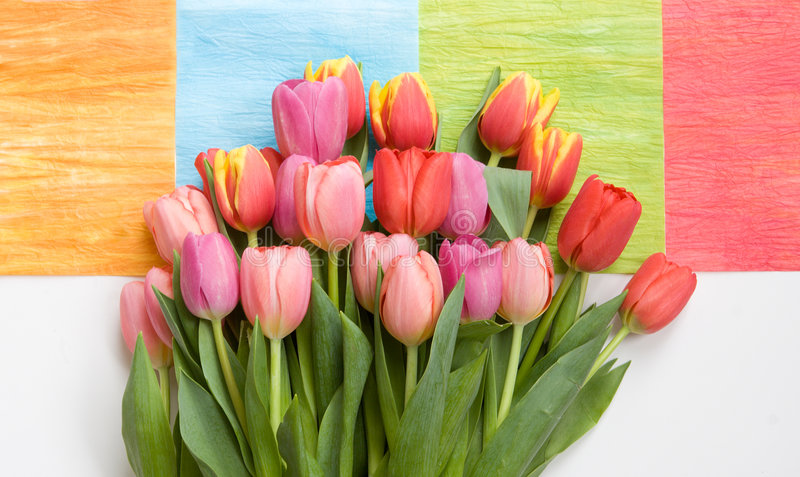 Bunch of tulips on colorful background royalty free stock photography