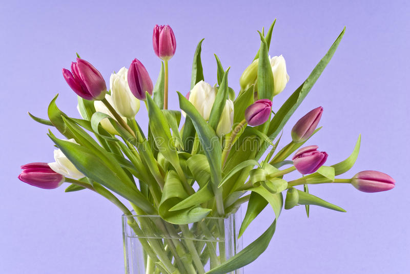 Bunch Of Tulips In A Glass Vase Stock Image