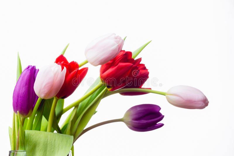 Bunch of tulips and white card stock photo