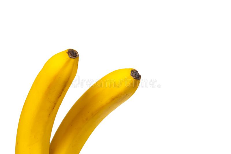 A bunch of two yellow bananas. Bright fresh fruits. Isolated photo for your design. Isolated on a white background royalty free stock photo