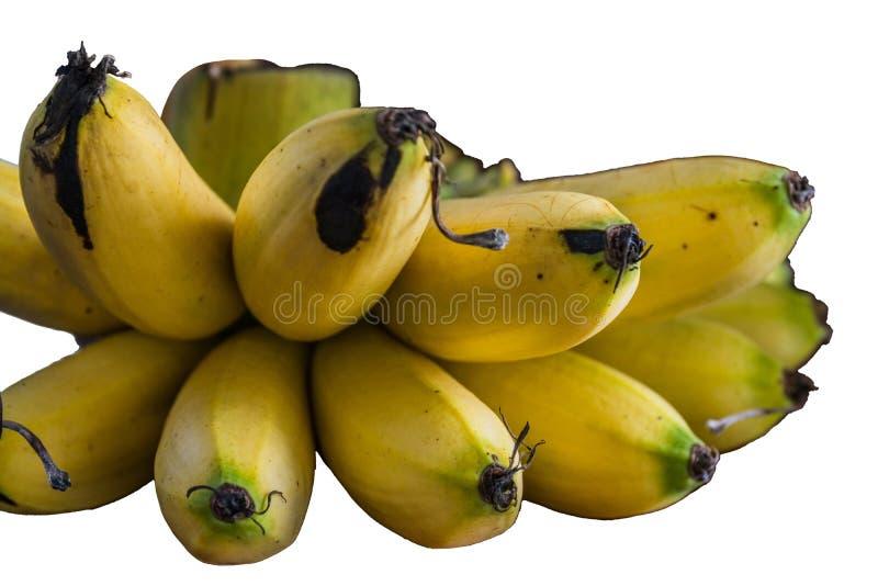 Bunch van op witte achtergrond geïsoleerde bananen stock fotografie