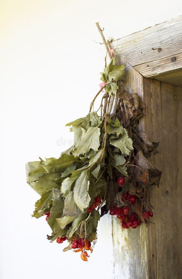 Bunch of viburnum twigs hanging on the door. Ukrainian village royalty free stock photos
