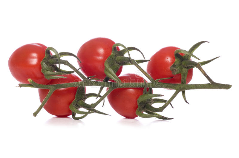 Bunch of vine tomatos cut out royalty free stock images