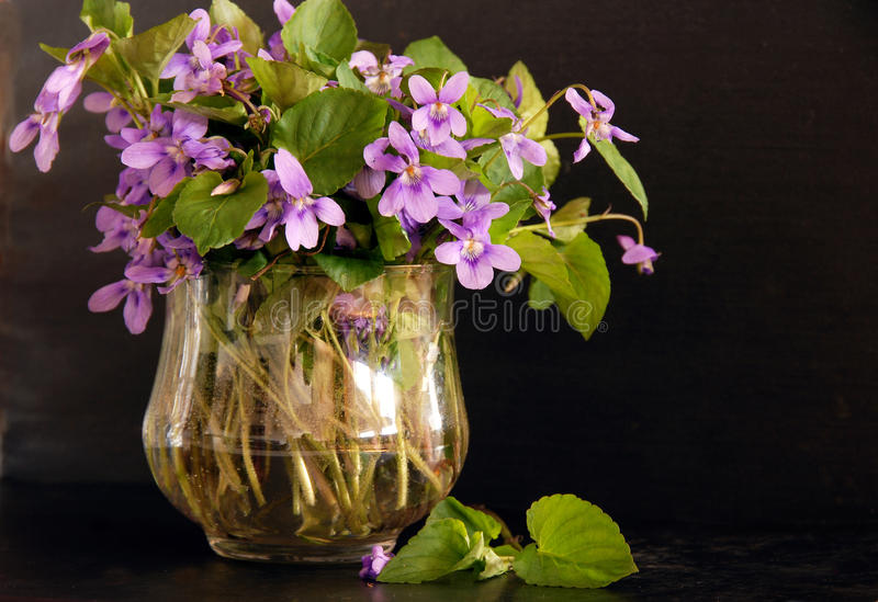 Bunch of viola. Bunch of fresh spring violas in glass over black background royalty free stock image