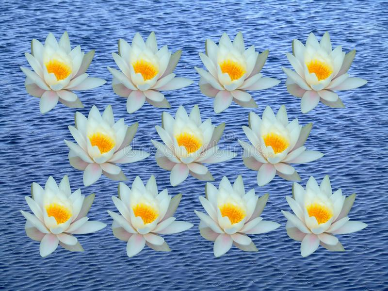 Bunch of water lily