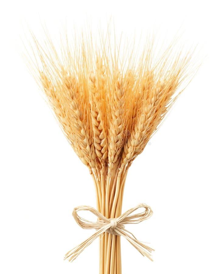 Bunch of wheat ears stock image