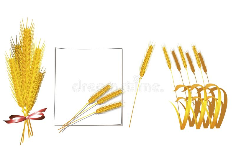 Bunch Of Wheat Vector Royalty Free Stock Photos
