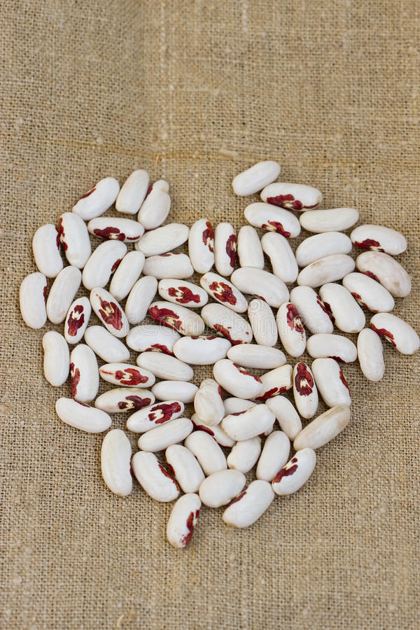Download Bunch of white beans stock photo. Image of vegetable - 33406020