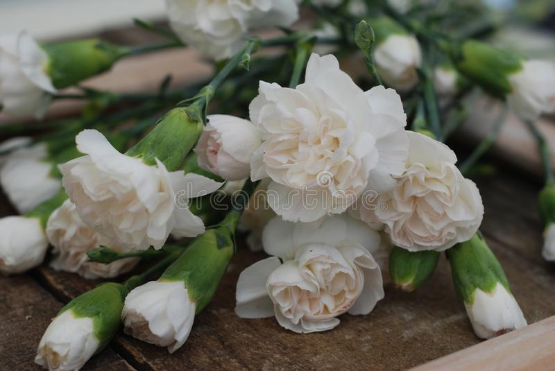 Bunch White Carnation Flower Bouquet Arrangement composition Isolated Rustic Wooden Background. Bunch White Carnation Flower Bouquet Arrangement composition royalty free stock image