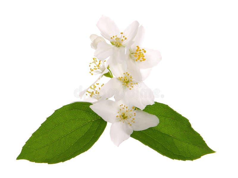 Магазин цветов, цветы жасмин купить в набережных челнах