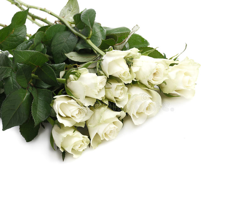 Bunch of white roses royalty free stock photo