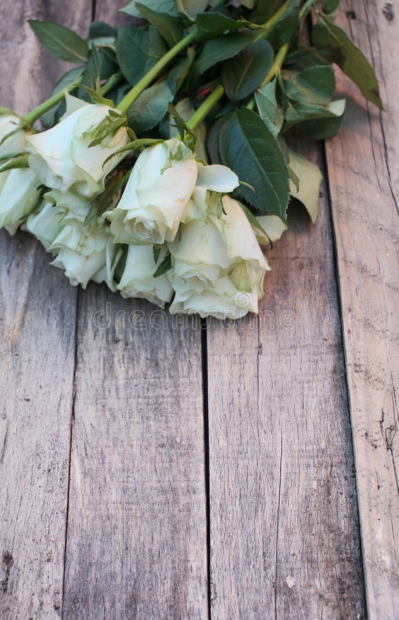 A bunch of white roses royalty free stock images