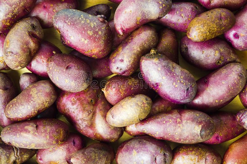 Bunch of whole red potatoes background royalty free stock photo