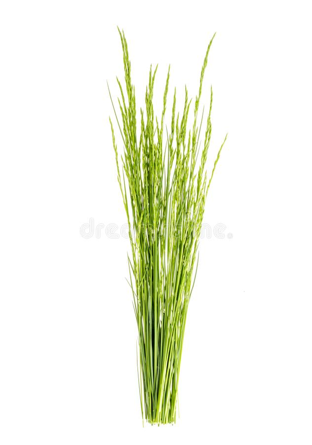 Bunch of wild green field grass isolated on white background. Studio Photo royalty free stock photos