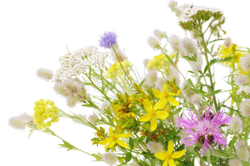 Bunch Of Wildflower Royalty Free Stock Images